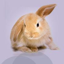 vétérinaire-image11